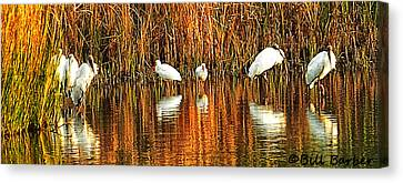 Wood Storks And 2 Ibis Canvas Print by Bill Barber