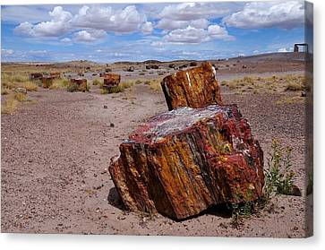 Wood To Stone Canvas Print by Gene Sherrill