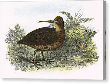 Woodcock Canvas Print by English School