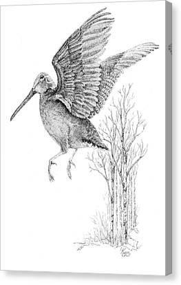 Woodcock In Flight Canvas Print by Carol Kutz