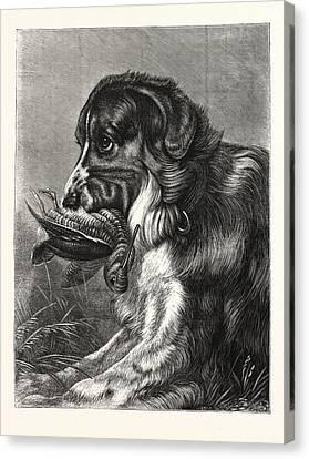 Woodcock-shooting, Hunt, Hunting, Dog Canvas Print by English School
