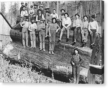 Woodcutters In California, 1891 Bw Photo Canvas Print
