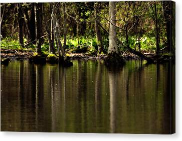 Wooded Reflection Canvas Print by Karol Livote