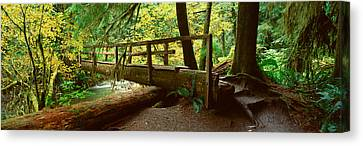 Wooden Bridge In The Hoh Rainforest Canvas Print by Panoramic Images