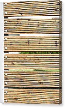 Wooden Fence Canvas Print by Tom Gowanlock