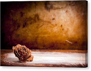Wooden Rose Background Canvas Print by Tim Hester