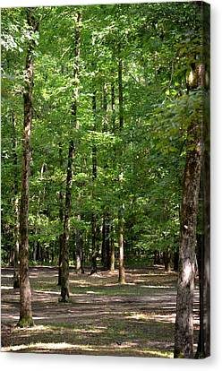 Woodforest 2013 Canvas Print by Maria Urso