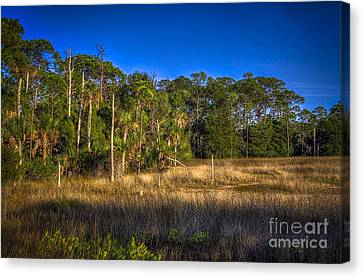 Mangrove Forest Canvas Print - Woodland And Marsh by Marvin Spates