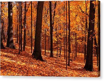 Woodland Bliss Canvas Print by Rachel Cohen