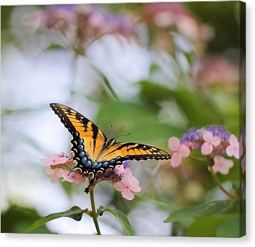 Woodland Butterfly Canvas Print by Katherine White