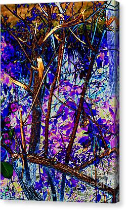 Woodland Canvas Print by Carol Lynch