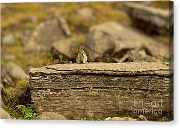 Woodland Critter Canvas Print