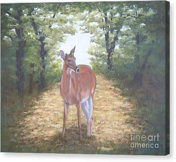 Woodland Encounter Canvas Print