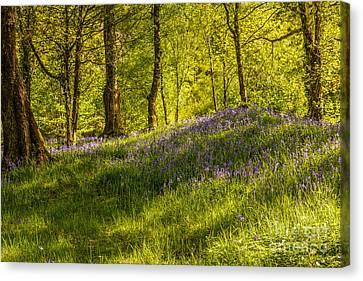 Woodland Of Bluebells Canvas Print by Amanda Elwell