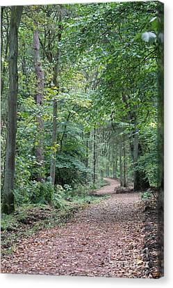 Woodland Path Canvas Print by David Grant