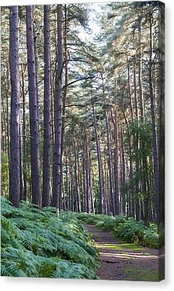 Woodland Path Canvas Print by David Isaacson
