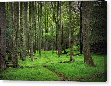 Woodland Path In Cades Cove Canvas Print