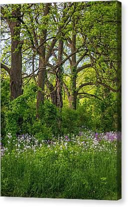 Woodland Phlox 2 Canvas Print by Steve Harrington