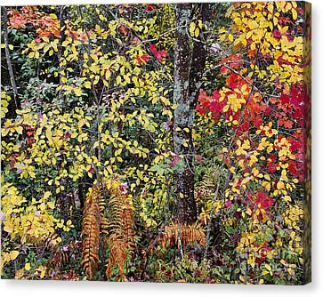 Woodland Tapestry Canvas Print by Alan L Graham