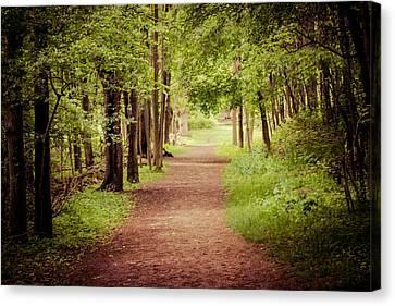 Woodland Trail Canvas Print