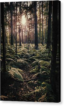 Forest Canvas Print - Woodland Trees by Amanda Elwell