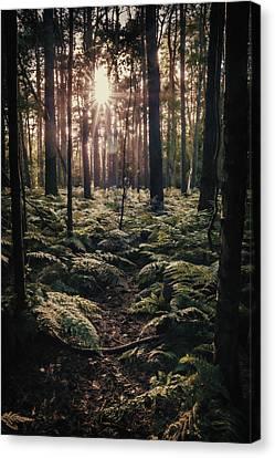 Woodland Trees Canvas Print by Amanda Elwell
