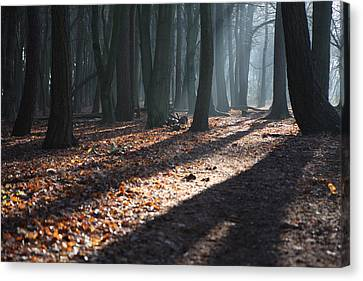 Woodland Walk Canvas Print by Mike Allison