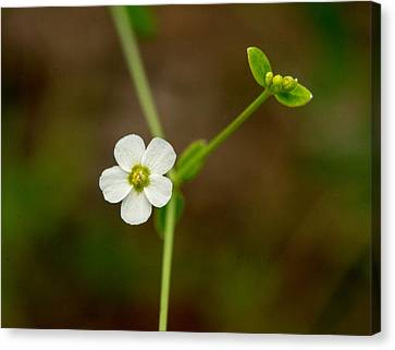 Woodland Weed With Simple Flower Canvas Print