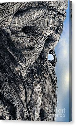 Woodman Canvas Print by Petros Yiannakas