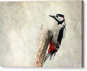 Woodpecker In Nature Canvas Print by Heike Hultsch