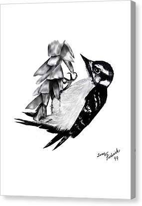 Canvas Print featuring the drawing Woodpecker by Terry Frederick