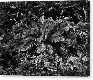Wood's Ferns  Canvas Print