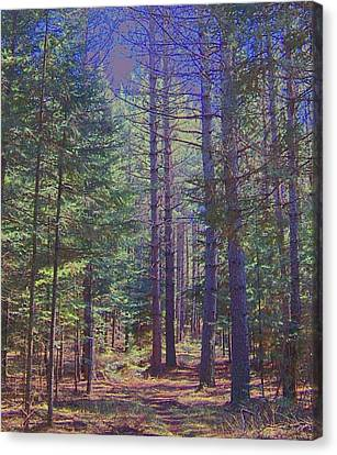 Woods II Canvas Print by Shirley Moravec