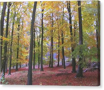 Woods In Autumn Canvas Print by Joyce Woodhouse