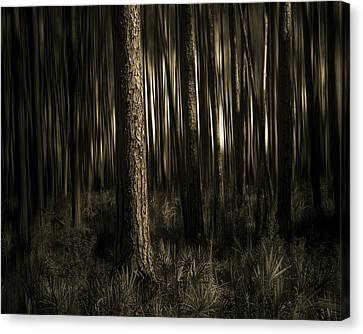 Woods Canvas Print by Mario Celzner