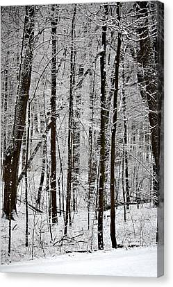 Woods On A Snowy Night Canvas Print by Penny Hunt