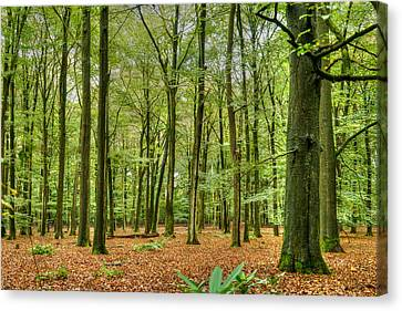 Woods Canvas Print by Uri Baruch
