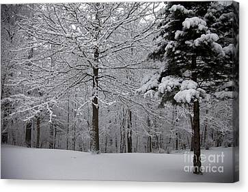 Woods View Canvas Print