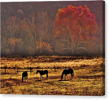 Woodsboro Morning Canvas Print by Robert Geary