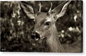 Woodside Deer Canvas Print