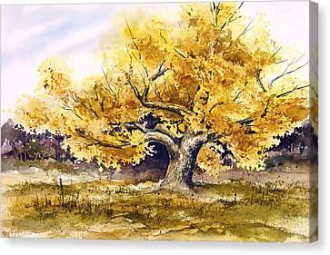 Woodward Cottonwood Canvas Print by Sam Sidders