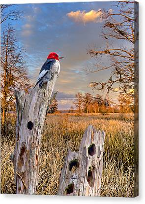 Woody In Paradise Canvas Print