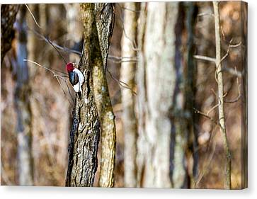 Canvas Print featuring the photograph Woody by Sennie Pierson