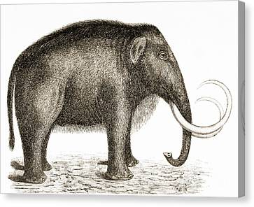 Woolly Mammoth Canvas Print by British Library