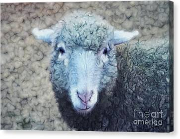 Wooly And Cuddly Canvas Print by Jutta Maria Pusl