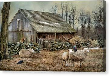 Wooly Bully Canvas Print by Robin-Lee Vieira