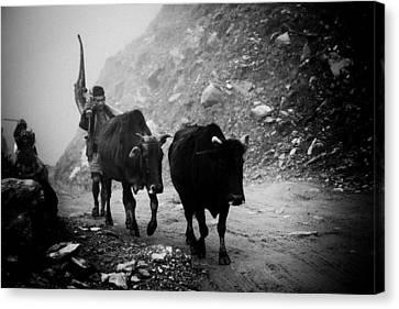 Tibetan Canvas Print - Work Hard Tamang People Langtang Nepal by Raimond Klavins