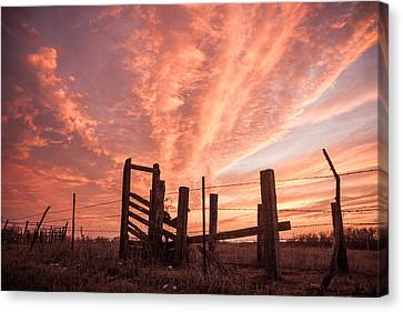 Working Cattle/ End Of Day Canvas Print by Shirley Heier