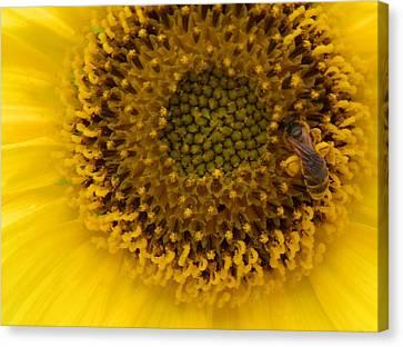 Working Honey Bee Canvas Print