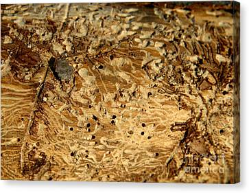 Canvas Print featuring the photograph Worm Wood - 1 by Kenny Glotfelty